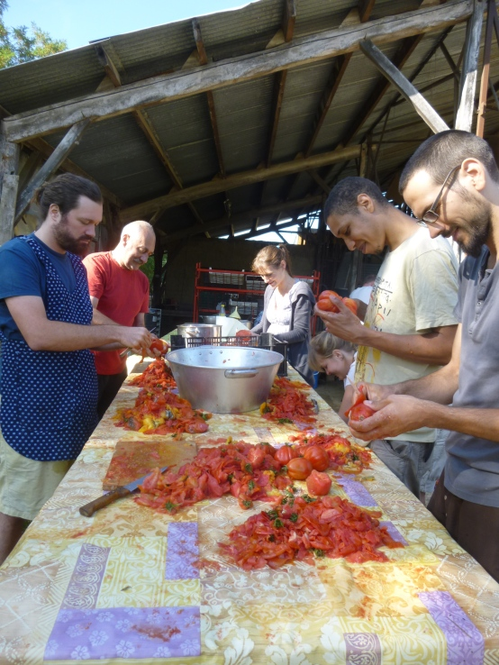 On pèle les tomates ébouillantées pour que ce soit plus simple
