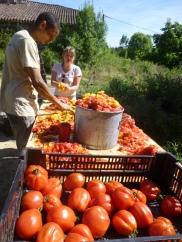 On presse et coupe les tomates